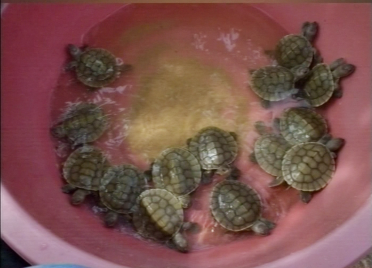 Turtle 14 09 16 3 copy